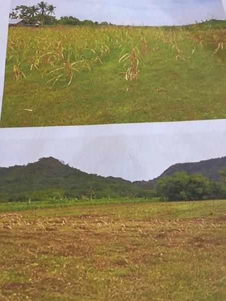 150 hectares Magallanes,Cavite rawland for sale, 1560000 m²